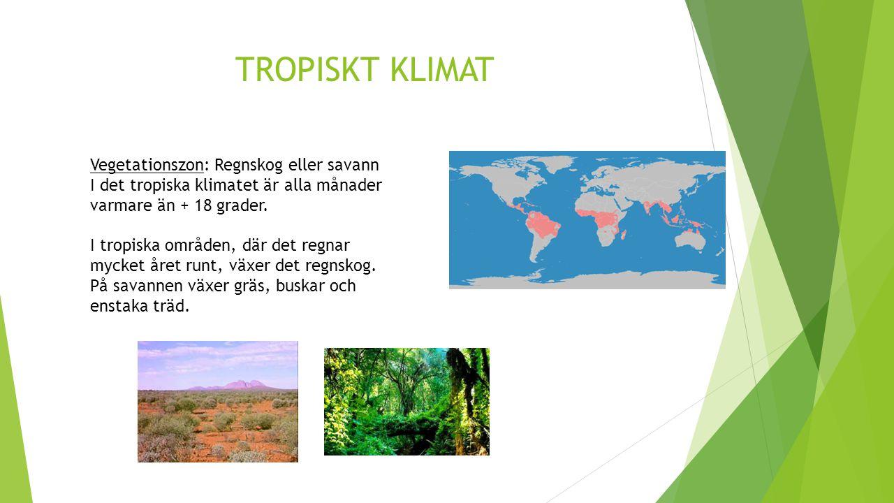 TROPISKT KLIMAT Vegetationszon: Regnskog eller savann
