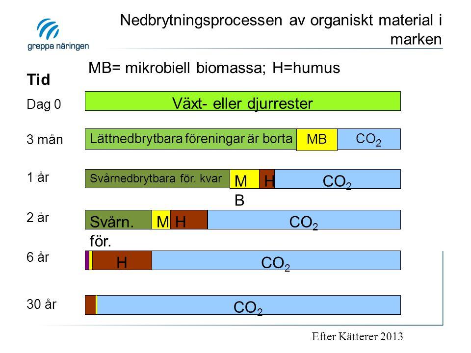 Nedbrytningsprocessen av organiskt material i marken