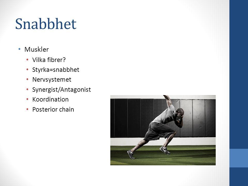 Snabbhet Muskler Vilka fibrer Styrka=snabbhet Nervsystemet