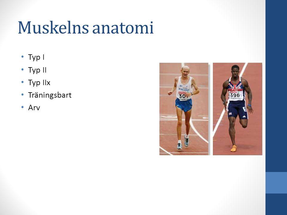 Muskelns anatomi Typ I Typ II Typ IIx Träningsbart Arv