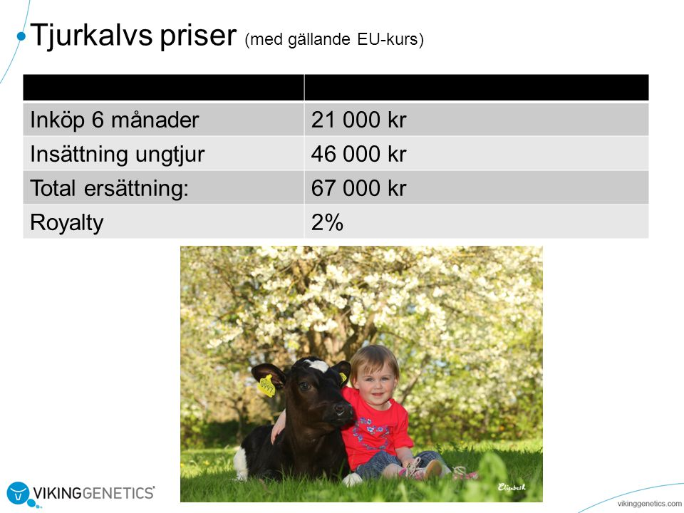 Tjurkalvs priser (med gällande EU-kurs)