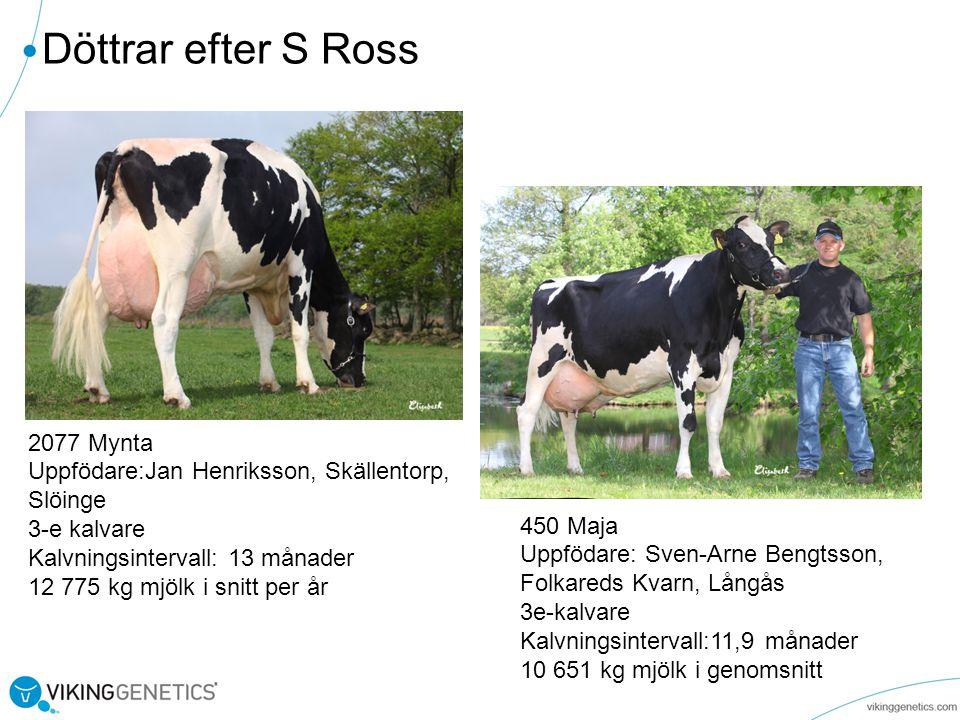 Döttrar efter S Ross 2077 Mynta Uppfödare:Jan Henriksson, Skällentorp,