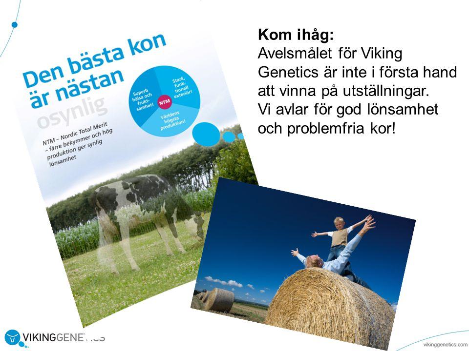 Kom ihåg: Avelsmålet för Viking. Genetics är inte i första hand. att vinna på utställningar. Vi avlar för god lönsamhet.