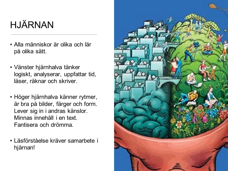HJÄRNAN Alla människor är olika och lär på olika sätt.