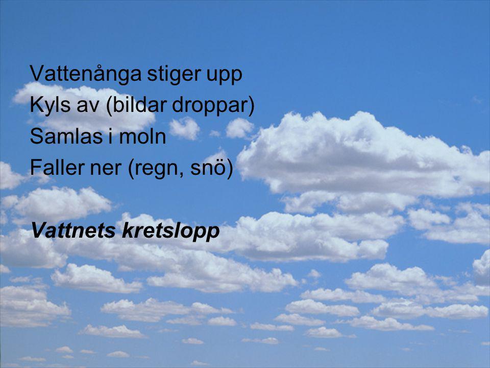Vattenånga stiger upp Kyls av (bildar droppar) Samlas i moln.