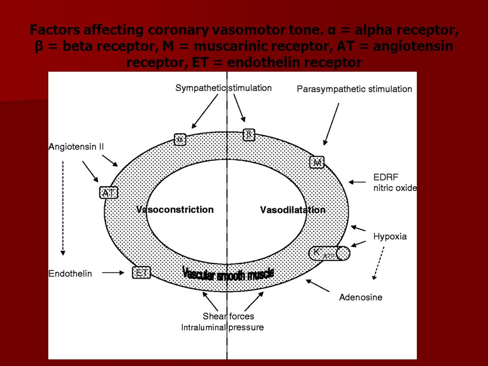 Factors affecting coronary vasomotor tone