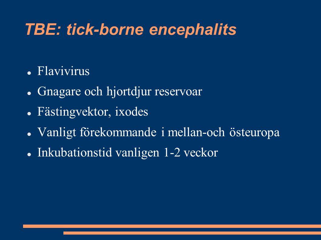 TBE: tick-borne encephalits
