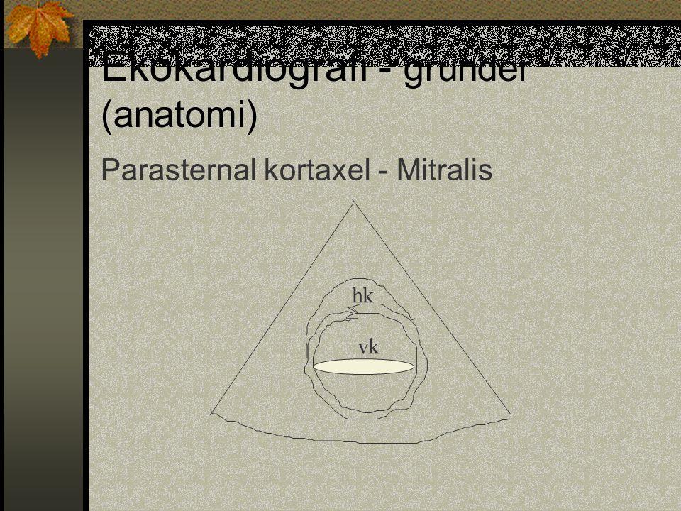 Ekokardiografi - grunder (anatomi)
