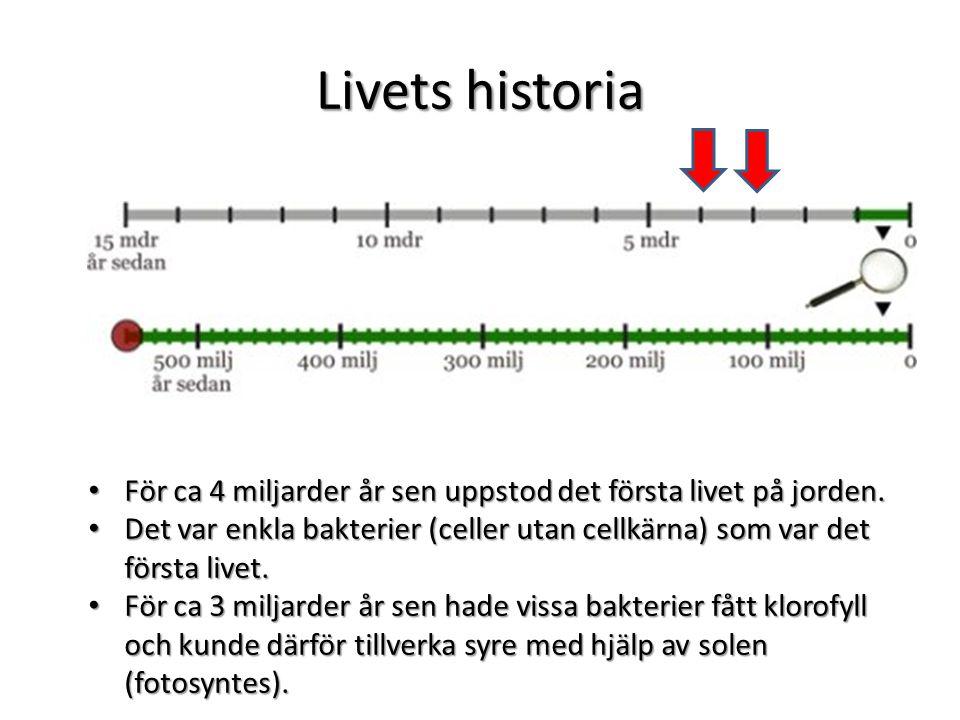 Livets historia För ca 4 miljarder år sen uppstod det första livet på jorden.