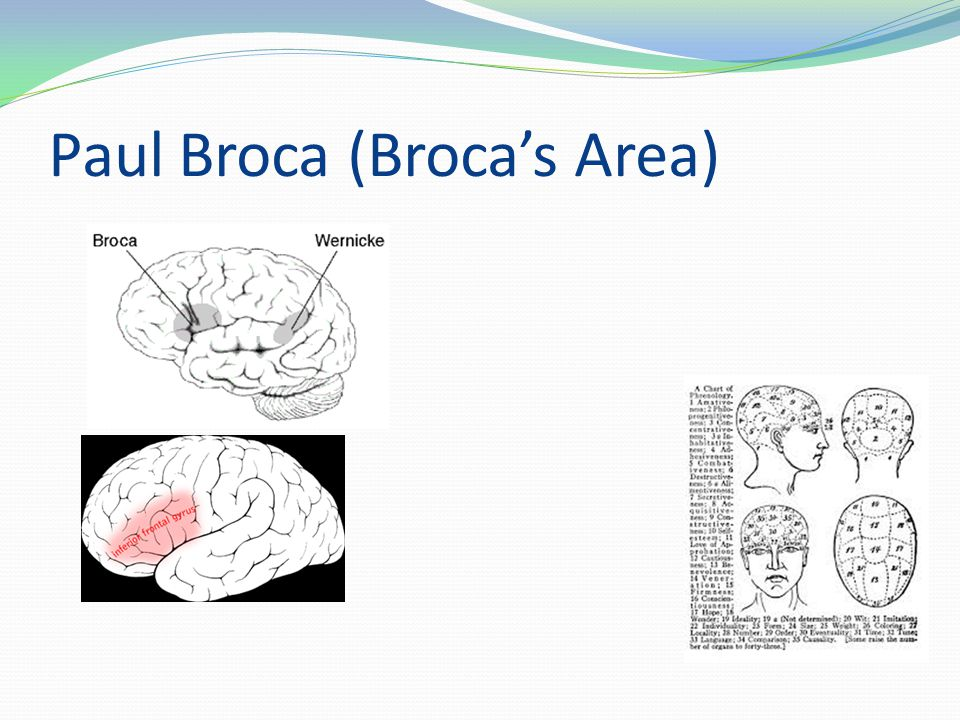 Paul Broca (Broca's Area)