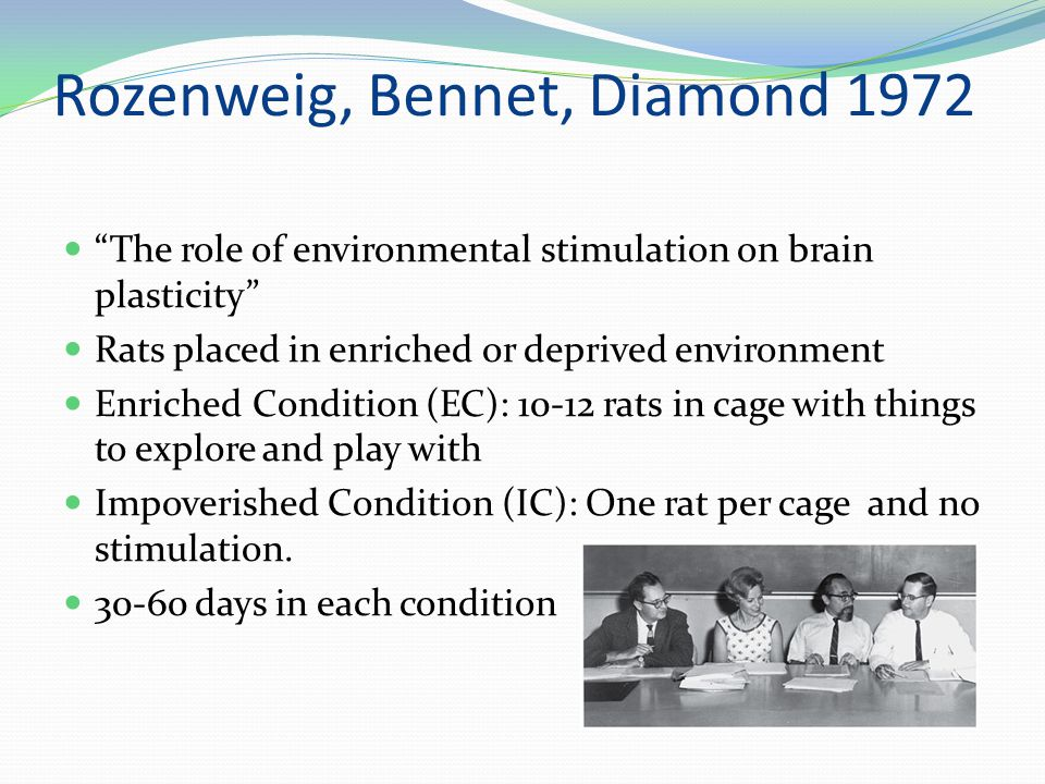 Rozenweig, Bennet, Diamond 1972