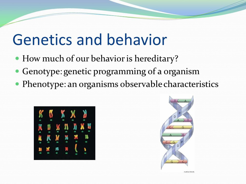 Genetics and behavior How much of our behavior is hereditary