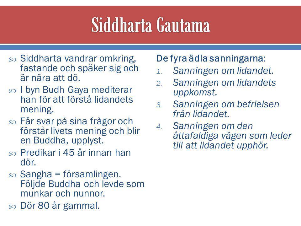 Siddharta Gautama Siddharta vandrar omkring, fastande och späker sig och är nära att dö.