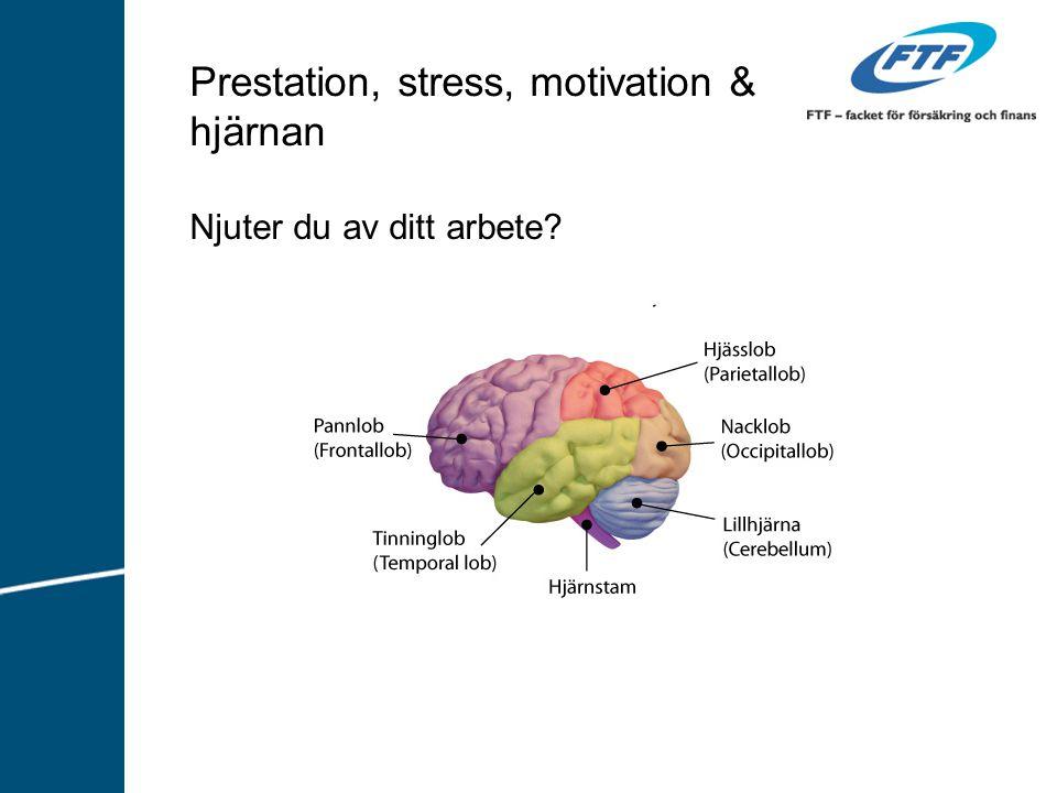 Prestation, stress, motivation & hjärnan Njuter du av ditt arbete