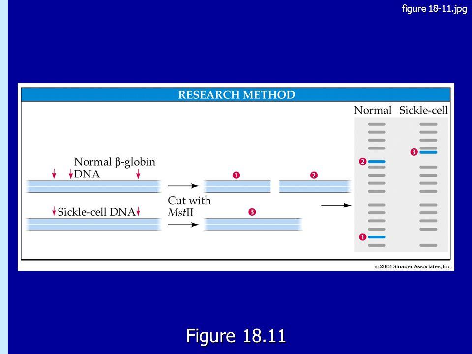 figure 18-11.jpg 18.11 Figure 18.11