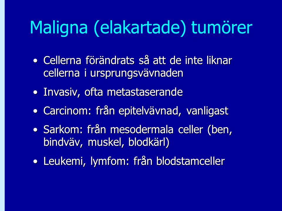 Maligna (elakartade) tumörer