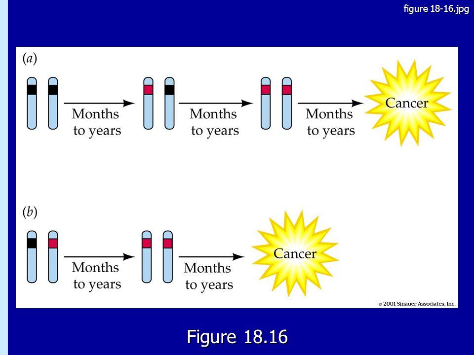 figure 18-16.jpg 18.16 Figure 18.16