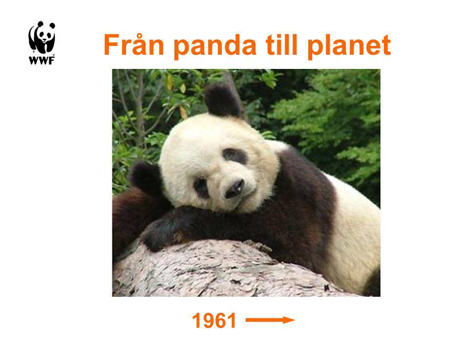 Från panda till planet