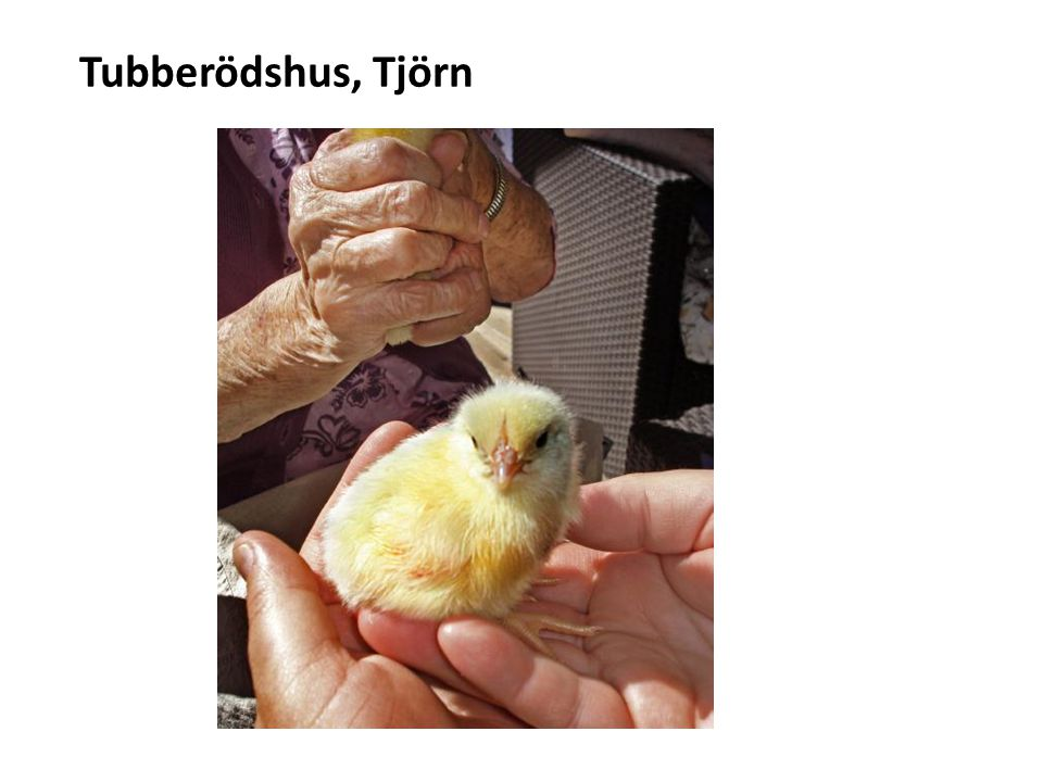 Tubberödshus, Tjörn