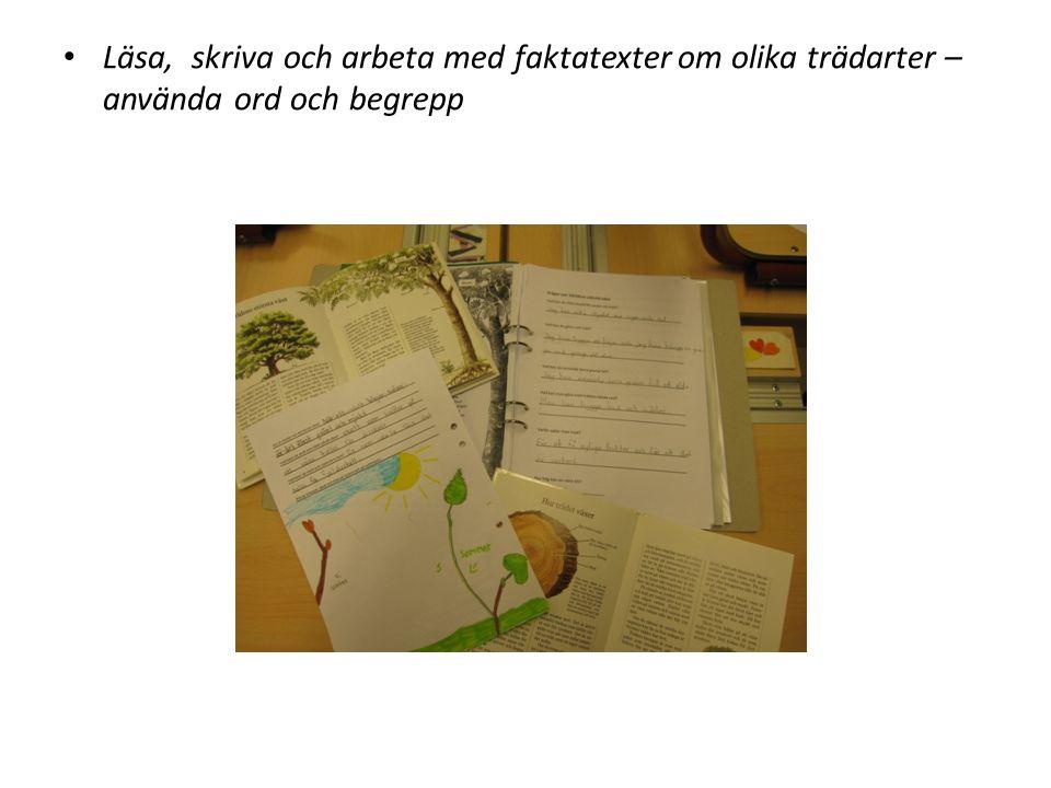 Läsa, skriva och arbeta med faktatexter om olika trädarter – använda ord och begrepp