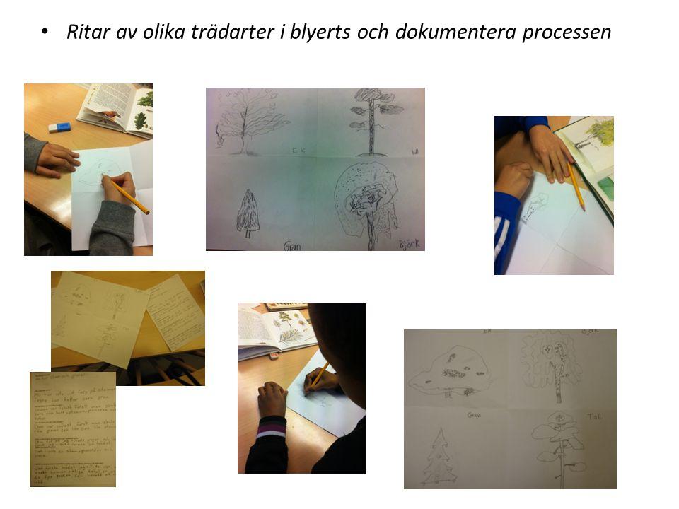 Ritar av olika trädarter i blyerts och dokumentera processen