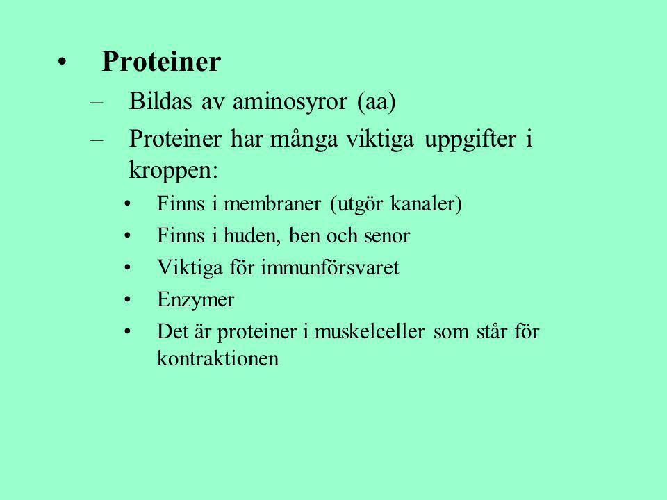 Proteiner Bildas av aminosyror (aa)