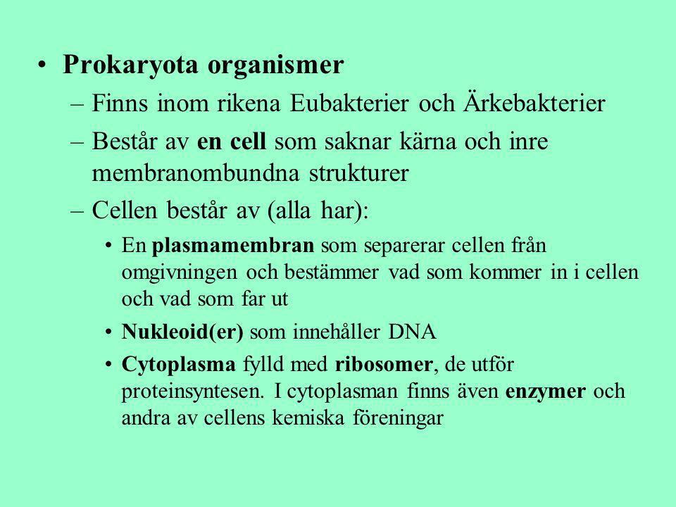 Prokaryota organismer