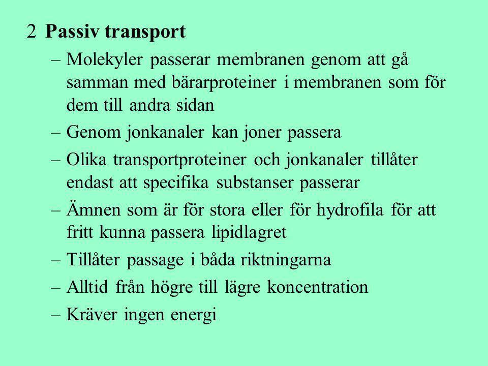 Passiv transport Molekyler passerar membranen genom att gå samman med bärarproteiner i membranen som för dem till andra sidan.