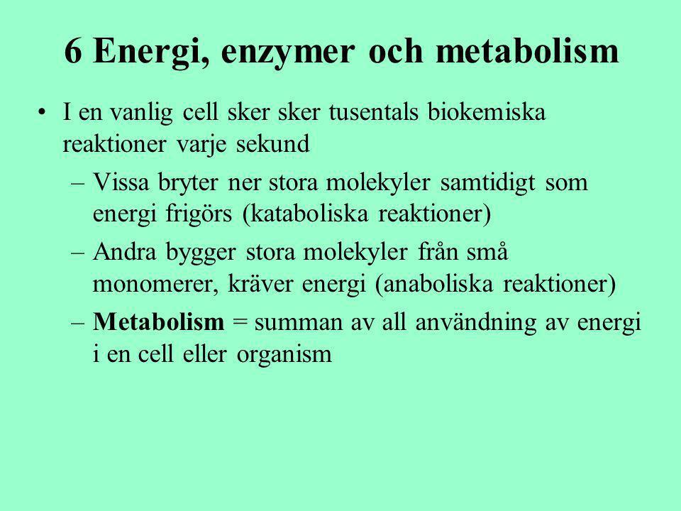 6 Energi, enzymer och metabolism