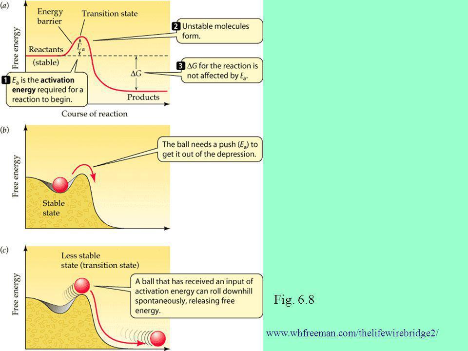 Fig. 6.8 www.whfreeman.com/thelifewirebridge2/