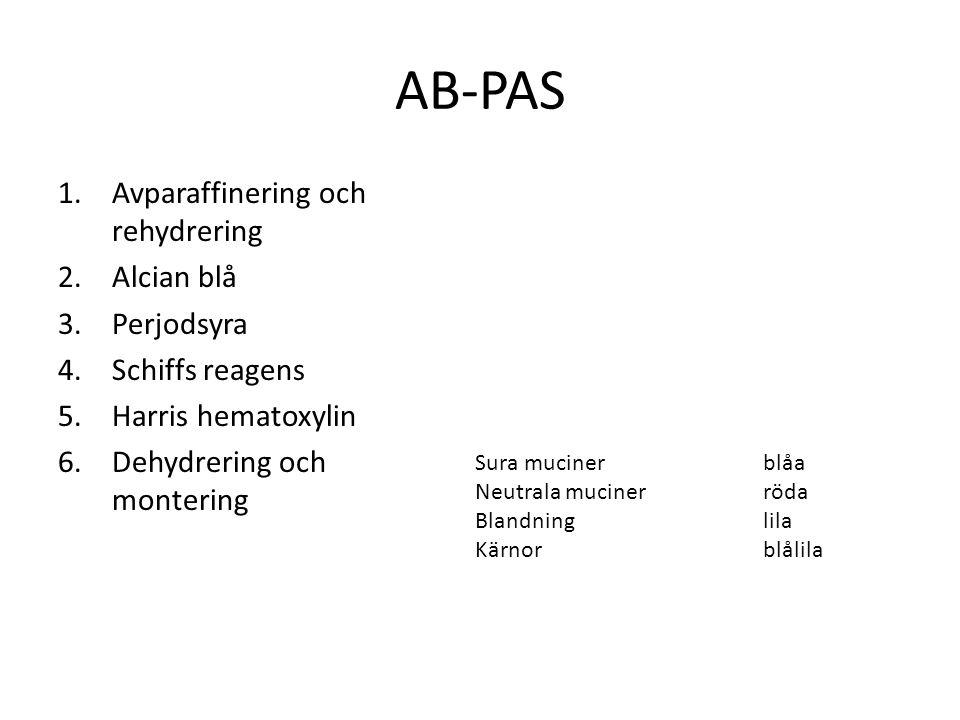 AB-PAS Avparaffinering och rehydrering Alcian blå Perjodsyra