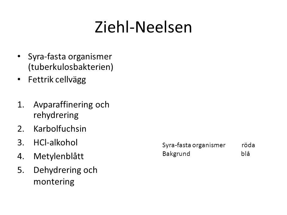 Ziehl-Neelsen Syra-fasta organismer (tuberkulosbakterien)