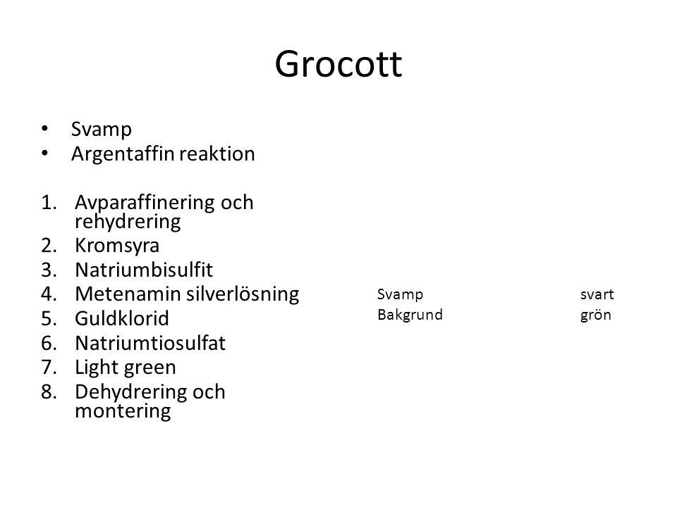 Grocott Svamp Argentaffin reaktion Avparaffinering och rehydrering