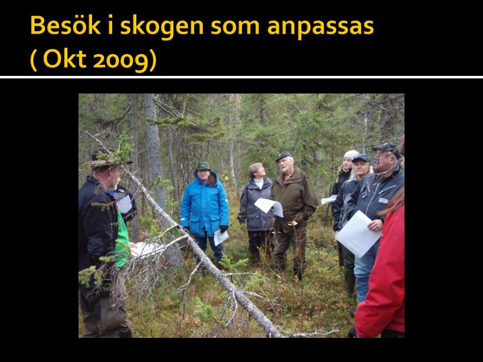 Besök i skogen som anpassas ( Okt 2009)