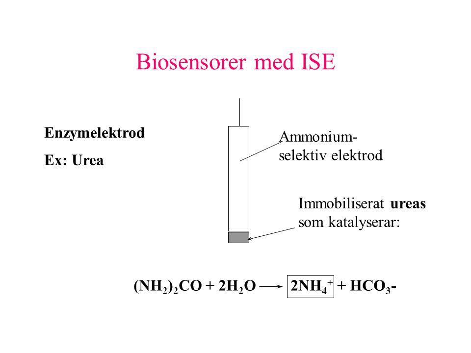 Biosensorer med ISE Enzymelektrod Ammonium- selektiv elektrod Ex: Urea