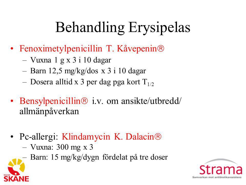 Behandling Erysipelas
