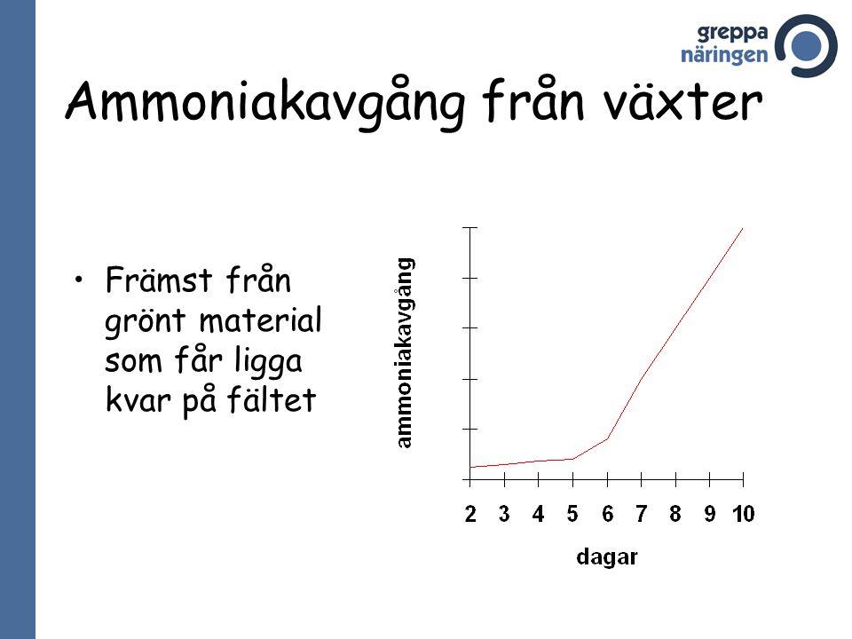 Ammoniakavgång från växter