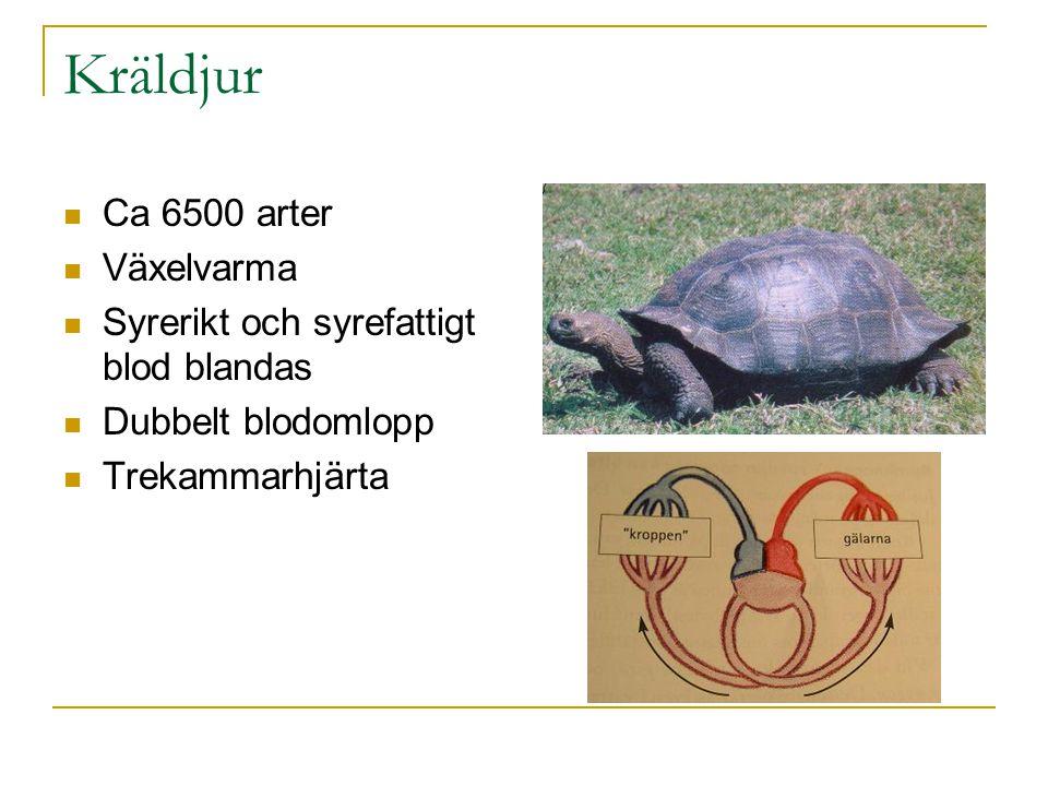 Kräldjur Ca 6500 arter Växelvarma