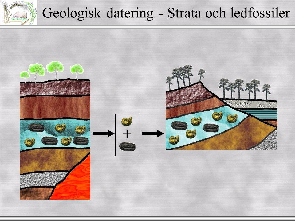 Geologisk datering - Strata och ledfossiler