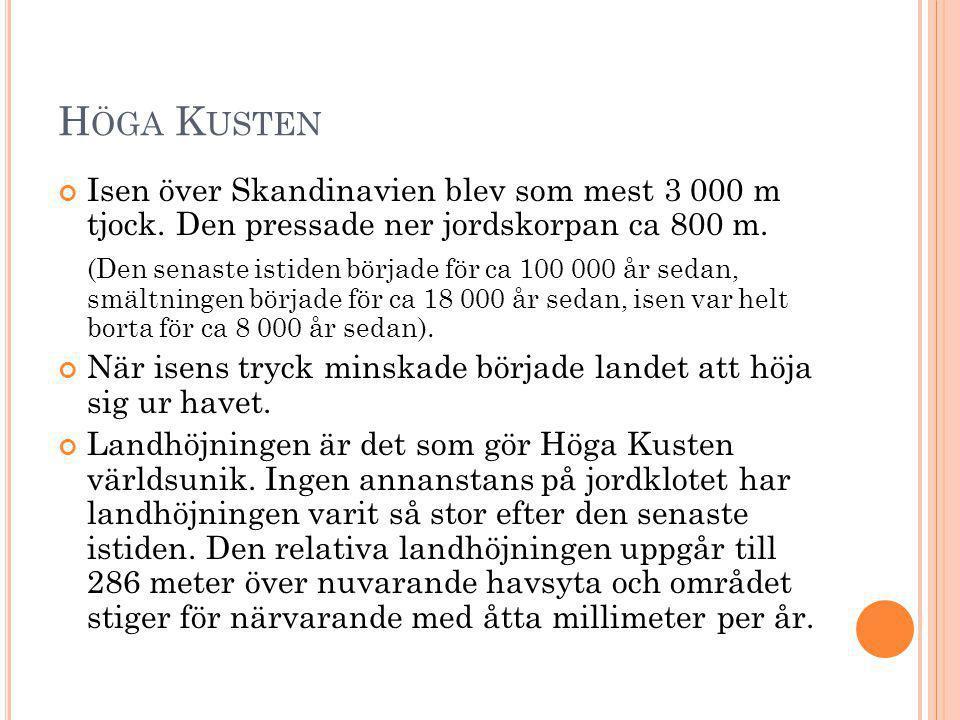 Höga Kusten Isen över Skandinavien blev som mest 3 000 m tjock. Den pressade ner jordskorpan ca 800 m.