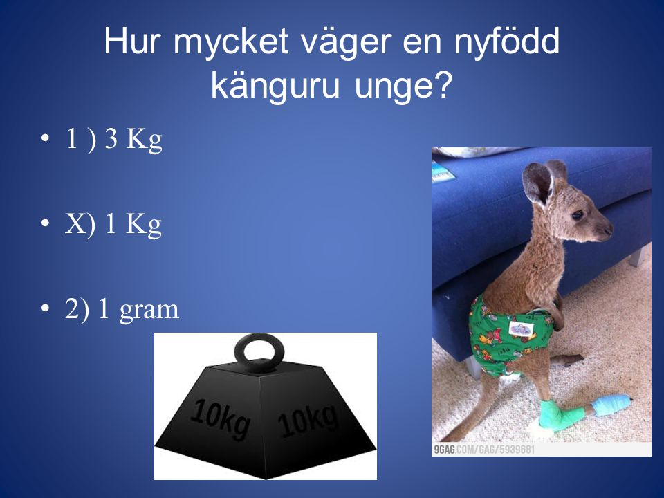 Hur mycket väger en nyfödd känguru unge