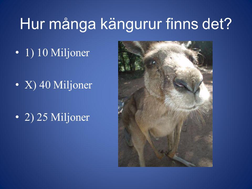 Hur många kängurur finns det