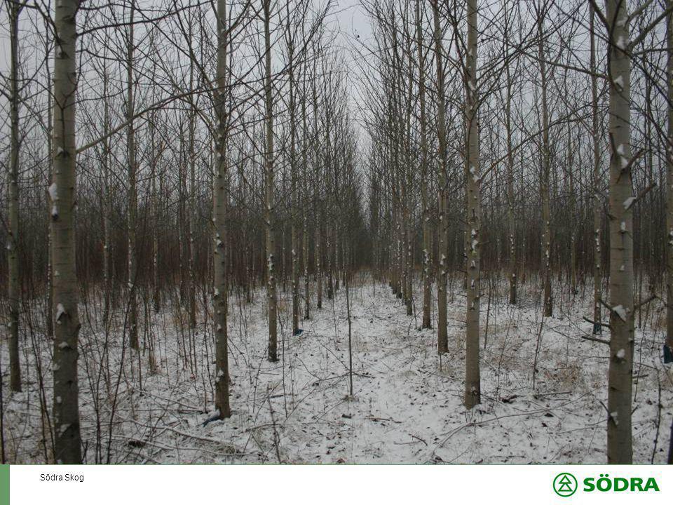 Södra Skog