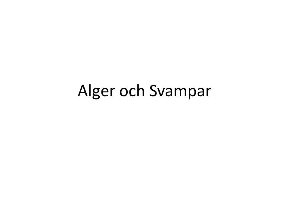 Alger och Svampar