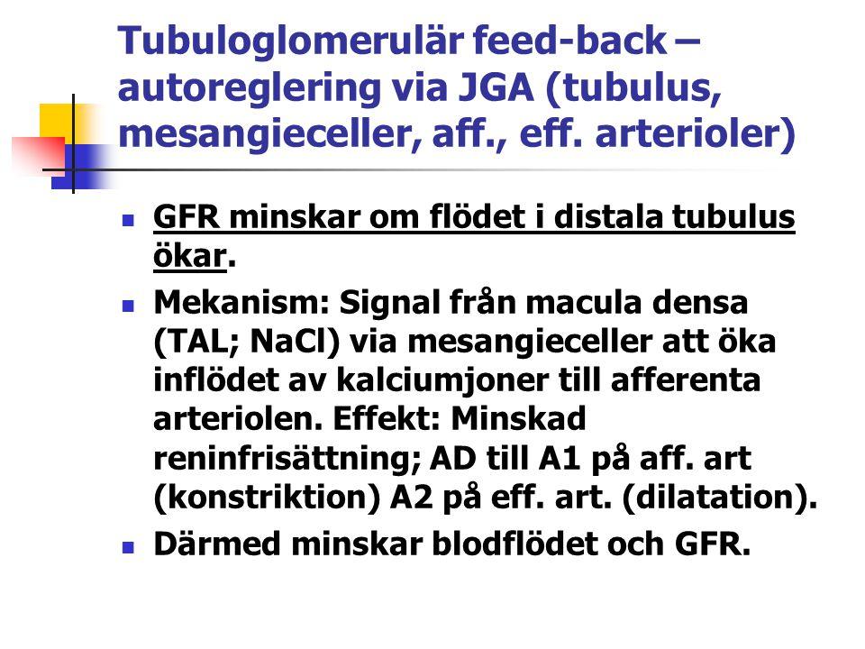 Tubuloglomerulär feed-back – autoreglering via JGA (tubulus, mesangieceller, aff., eff. arterioler)