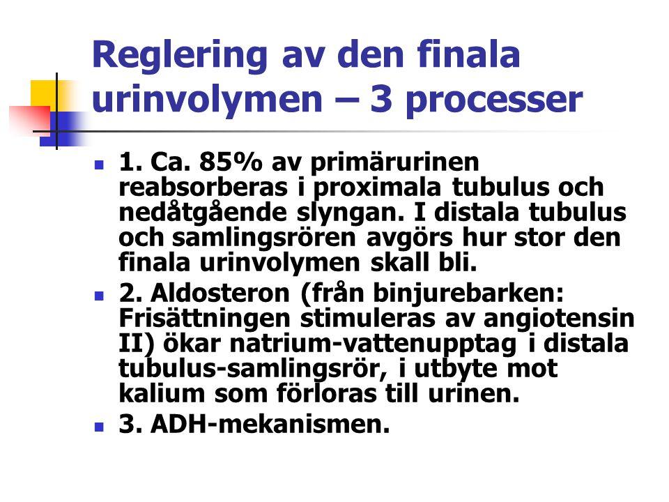 Reglering av den finala urinvolymen – 3 processer