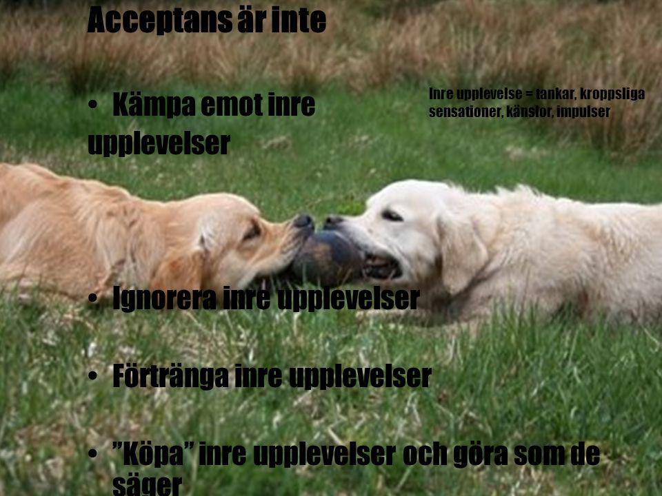 Acceptans är inte Kämpa emot inre upplevelser