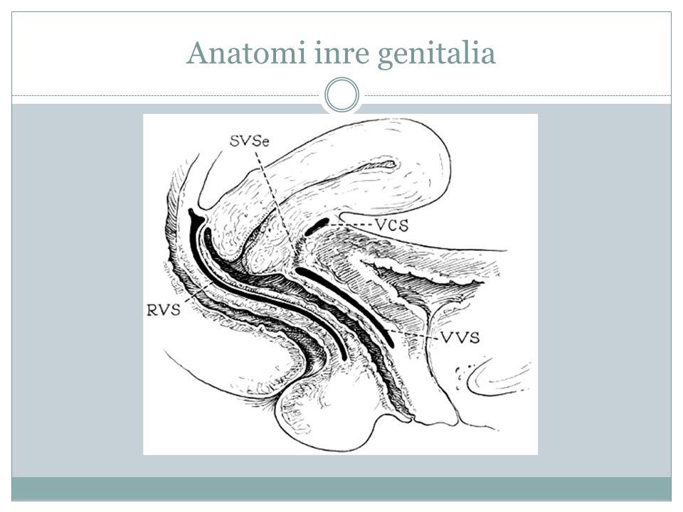 Anatomi inre genitalia