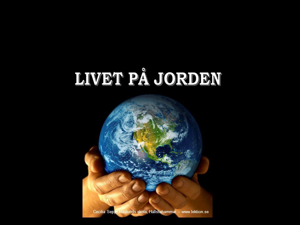 LIVET PÅ JORDEN Cecilia Sepp, Näslunds skola, Hallstahammar – www.lektion.se