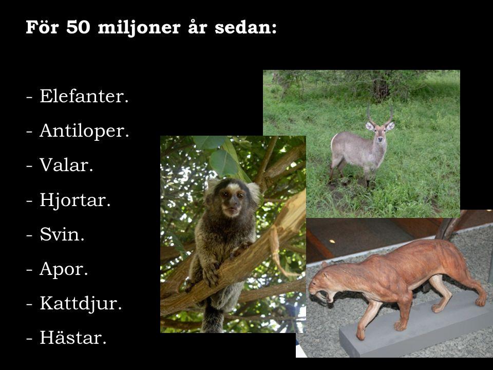 För 50 miljoner år sedan: Elefanter. - Antiloper. Valar. Hjortar. Svin. Apor. Kattdjur. Hästar.